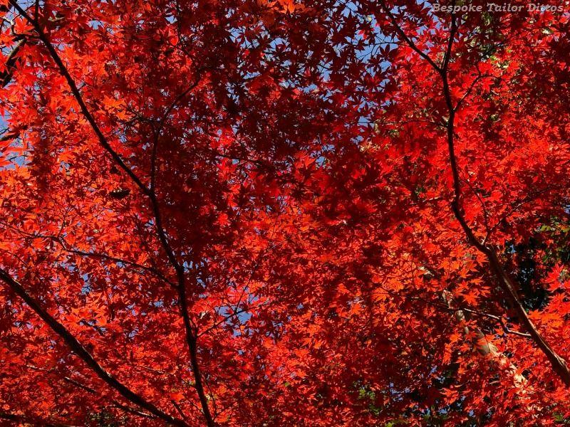 【 紅葉のカシミア、そしてシャツ、、、】